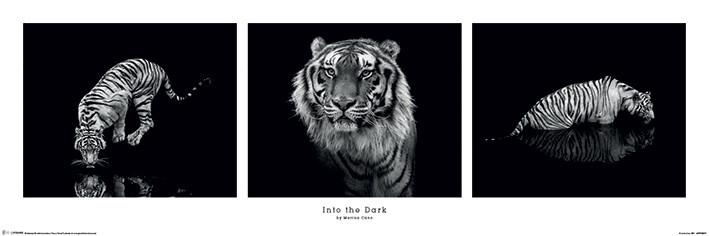 Poster  Marina Cano - Into the Dark