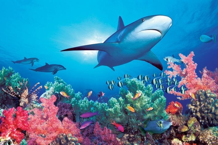 HD Wallpapers Desktop: Ocean Life HD DeskTop Wallpapers