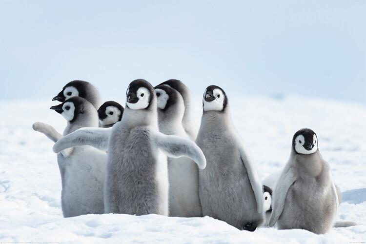 Poster Penguins - Family