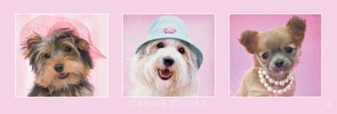 Rachael Hale - canine cuties Poster