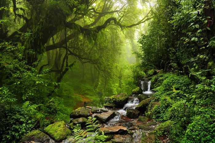 Poster Rain Forrest