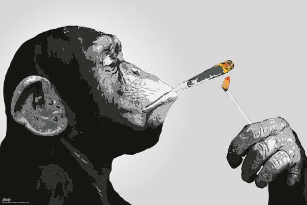 Poster Steez - Monkey Smoking