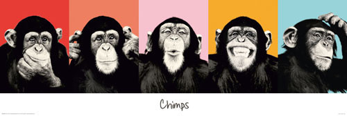 The Chimp - compilation Poster, Art Print