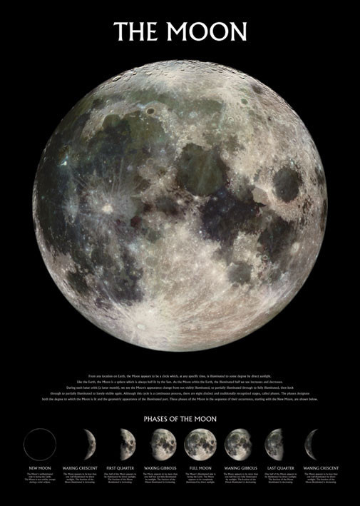 Pôster The moon – stage of the moon