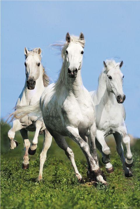 three running horses bob langrish poster sold at abposters com