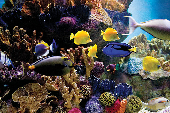 Tropical Fish Coral Poster