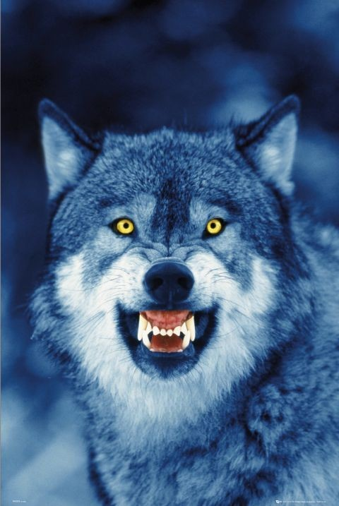 wolf poster sold at abposters com