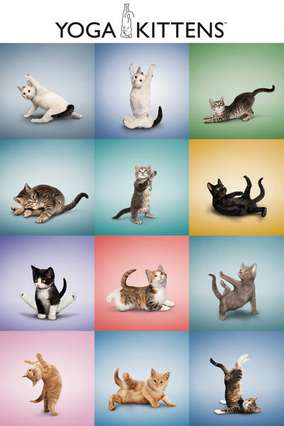 Yoga - Kittens Grid Poster