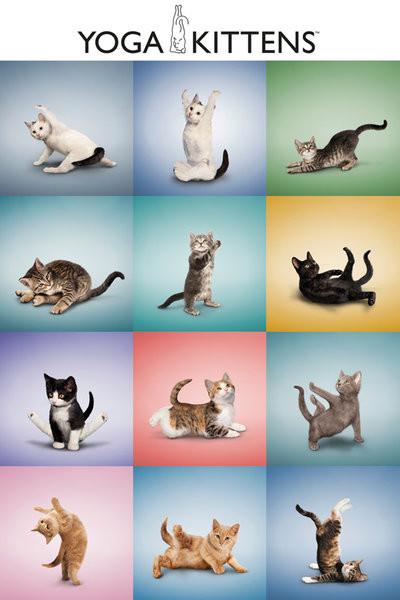 Yoga - Kittens Grid Poster, Art Print