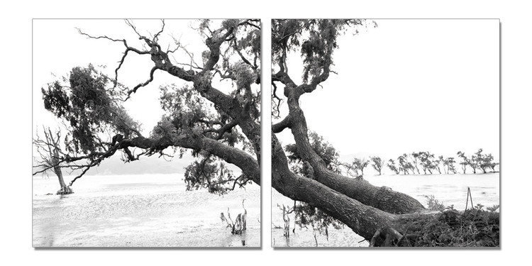 Praying Tree (B&W) Tableau Multi-Toiles