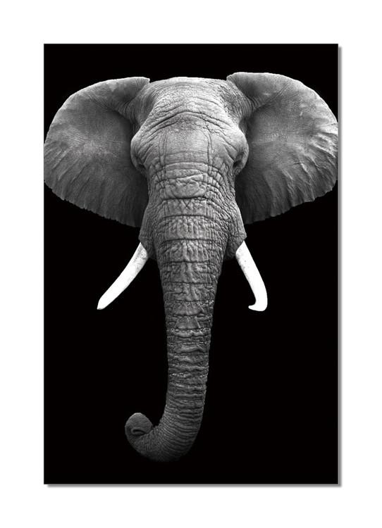 African Elephant (B&W) Mounted Art Print