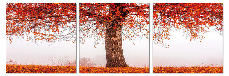 Alone tree in autumn Mounted Art Print