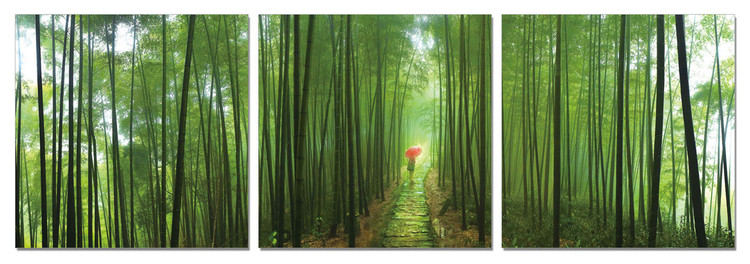 Bamboo Forest Mounted Art Print