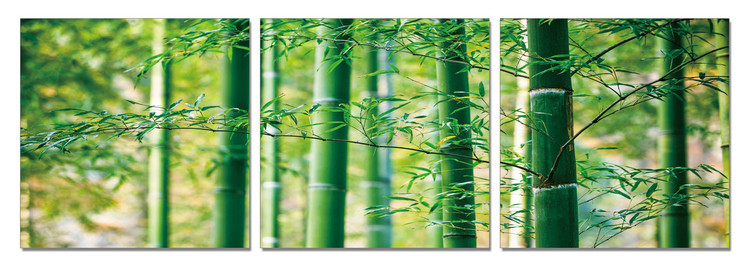 Bamboo Forest - Leaves Mounted Art Print