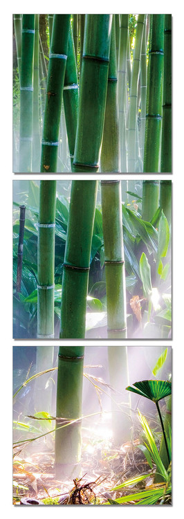 Bamboo Forest - Sunbeams Mounted Art Print