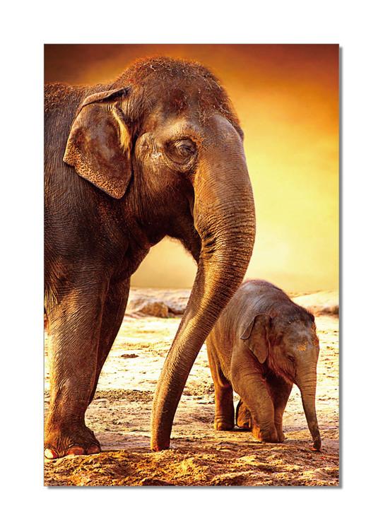 Elephants - Mom and Baby Mounted Art Print