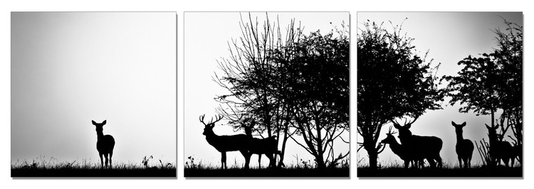 Forest Life - Silhouettes Mounted Art Print