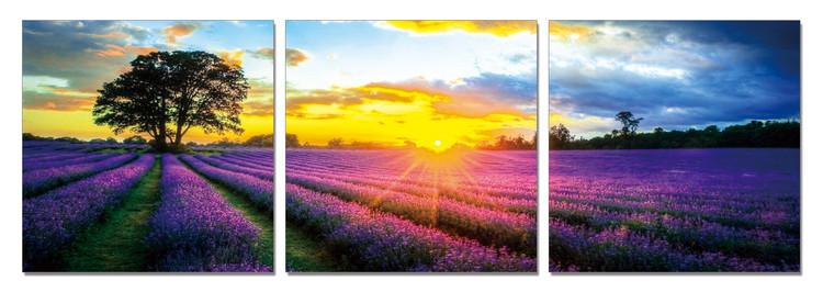 Lavender Field Mounted Art Print