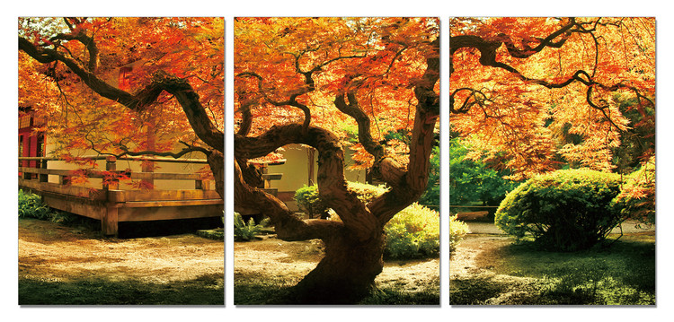 Maple Tree in Autumn Mounted Art Print