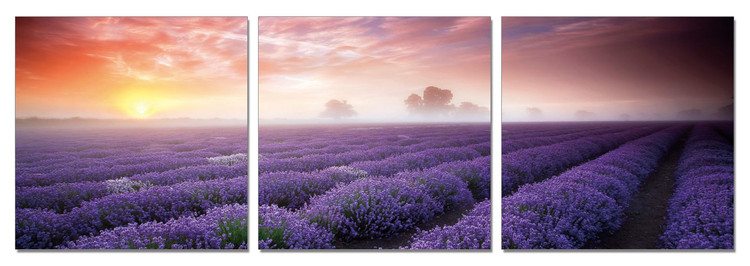 Mist over the Lavender Field Mounted Art Print
