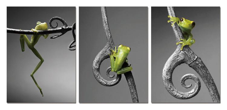 New Model - Frog Mounted Art Print