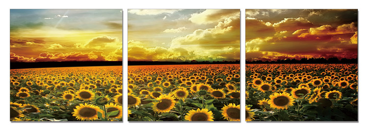 Sunflower Field Mounted Art Print