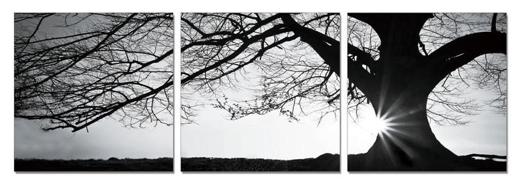Tree - Silhouette (B&W) Mounted Art Print