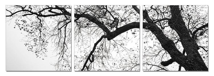 Treetop (B&W) Mounted Art Print