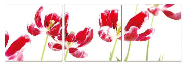 Tulips Mounted Art Print