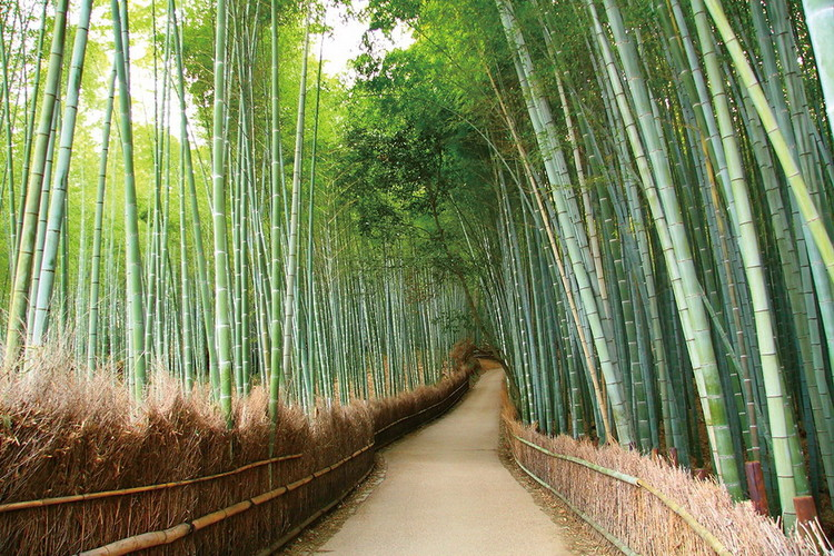 Quadro em vidro Bamboo Forest - Path