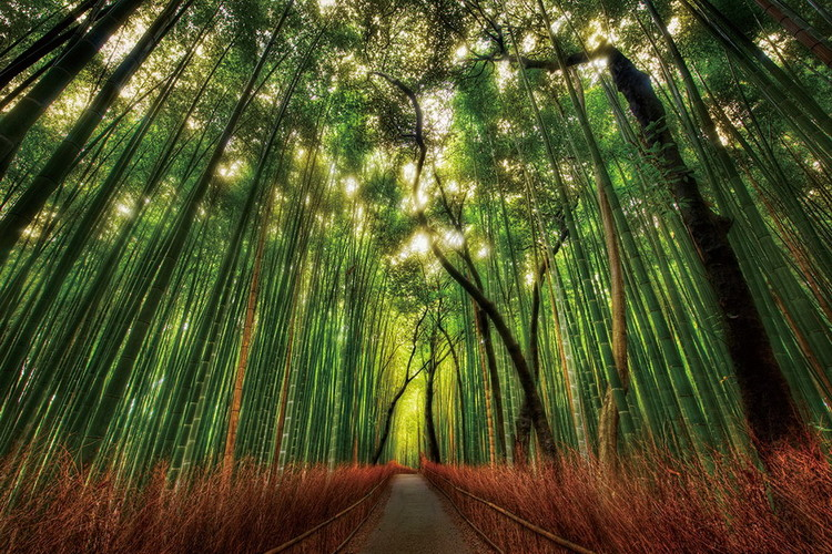 Quadro em vidro Bamboo Forest - Straight Path
