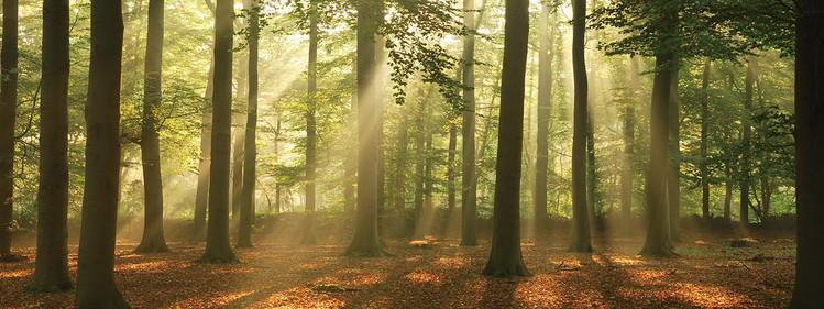 Quadro em vidro Forest - Sunny Forest
