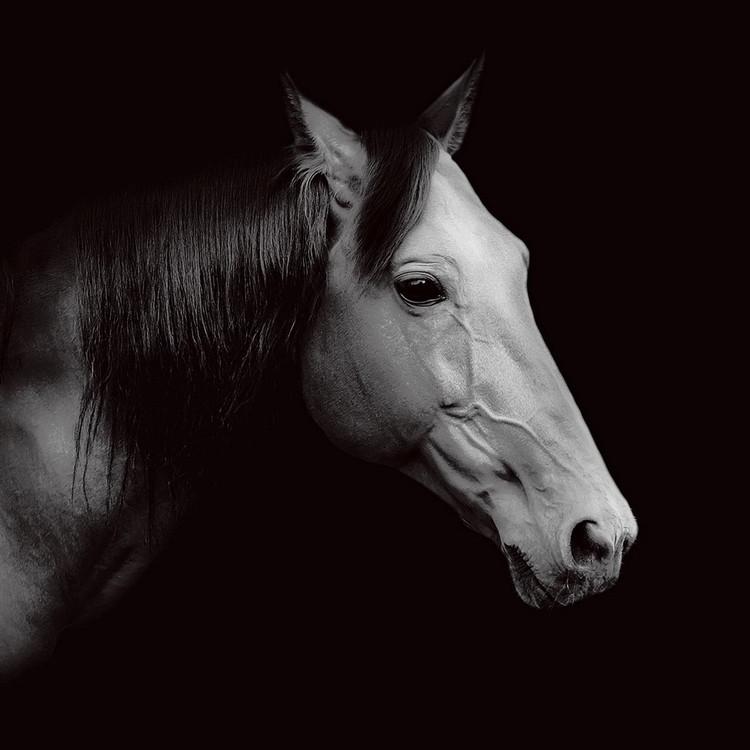 Quadro em vidro Horse - Head b&w