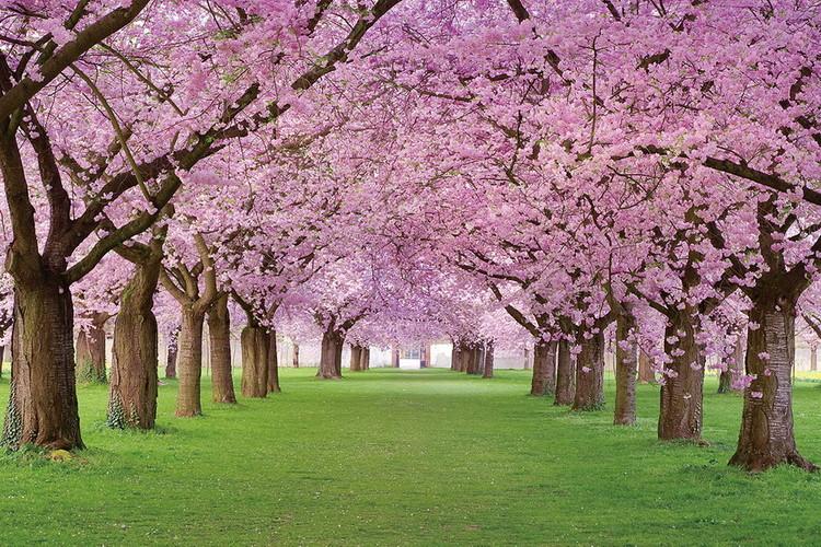 Quadro em vidro Pink Blossoms - Way