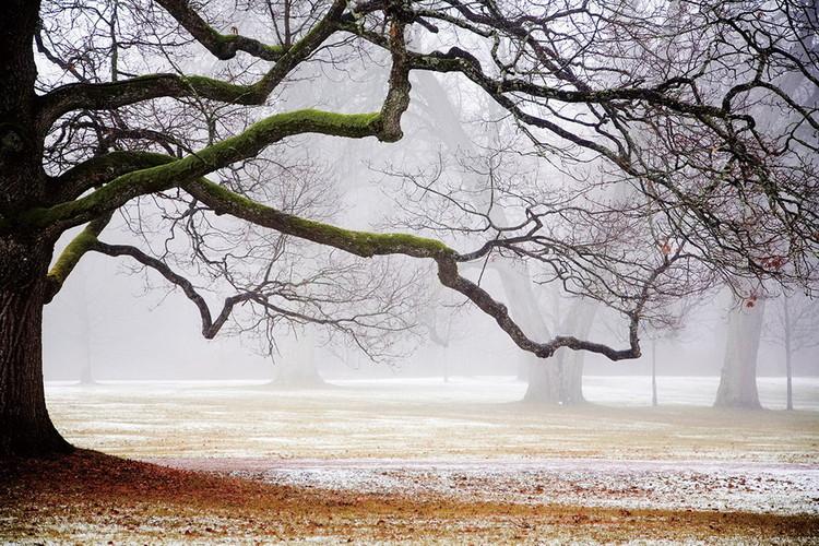 Quadro em vidro Tree in Mist