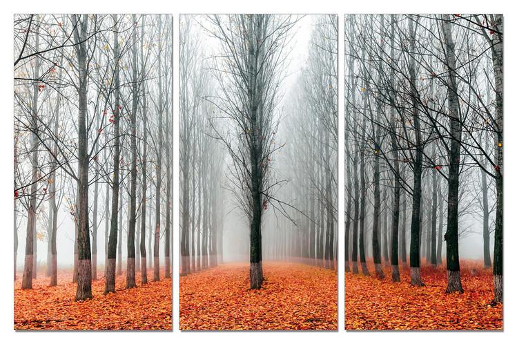 Quadro  Autumn Alley