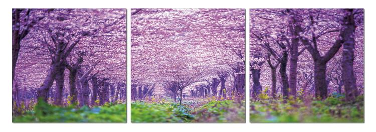 Quadro  Blossoming orchard