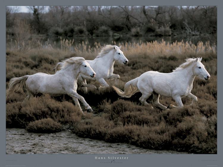 Reprodução do quadro Equus 3 - Camargue - France