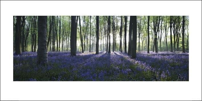 Reprodução do quadro Forest - Blue