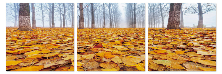 Quadro  Ground covered with leaves