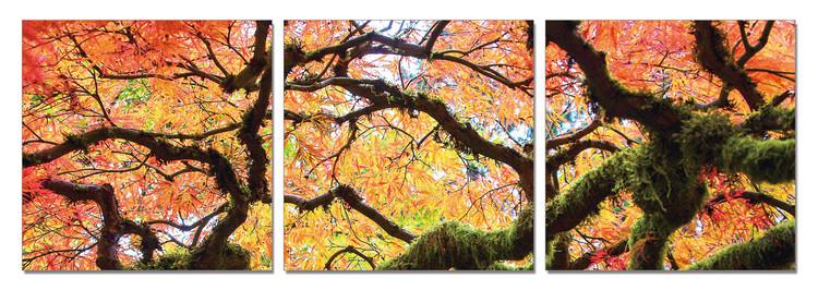 Quadro  View of autumn tree's crown