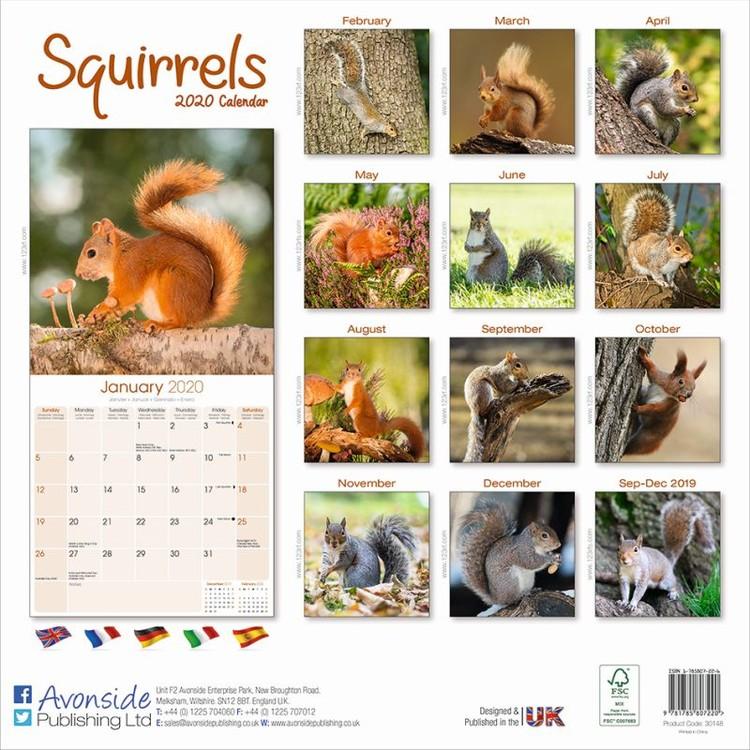 Squirrel Calendar 2021 Squirrels   Wall Calendars | Large selection
