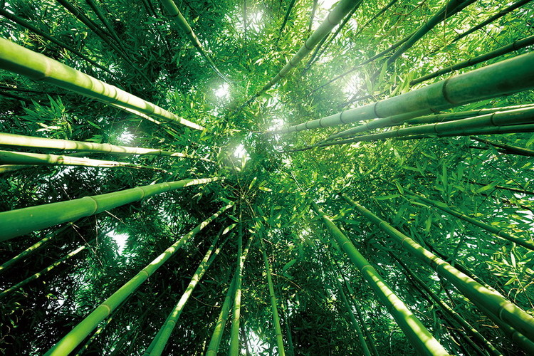 Tableau sur verre Bamboo Forest