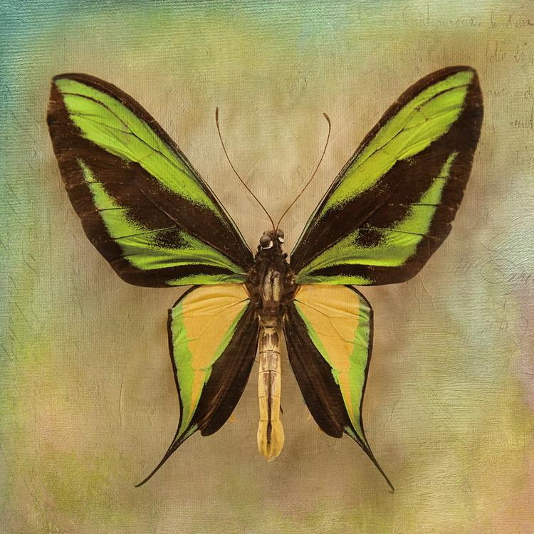 Tableau sur verre Butterfly - Green