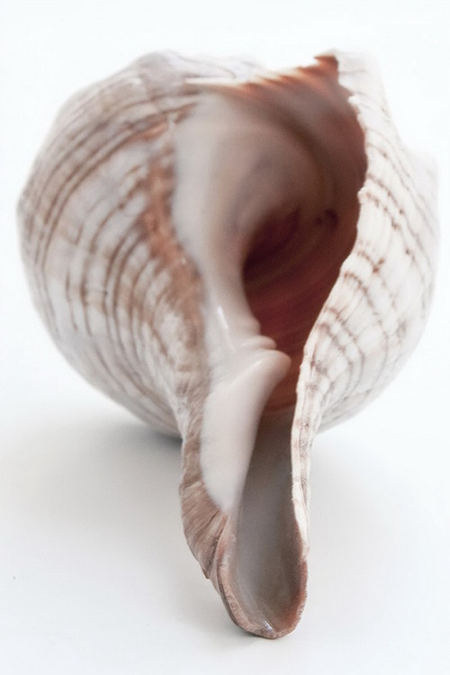 Tableau sur verre Shell - Bottom