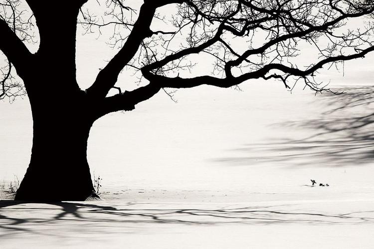 Tableau sur verre Tree - Black and White