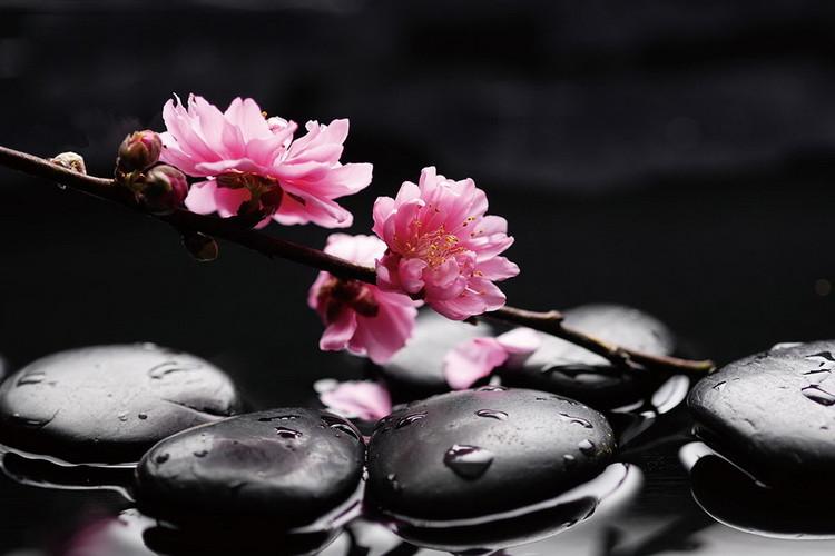 Tableau sur verre Zen - Pink Orchid 1