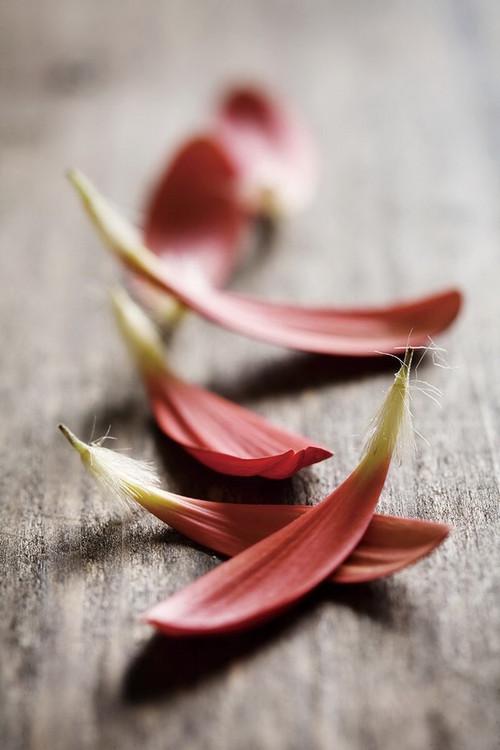 Tableau sur verre Zen - Red Leaves