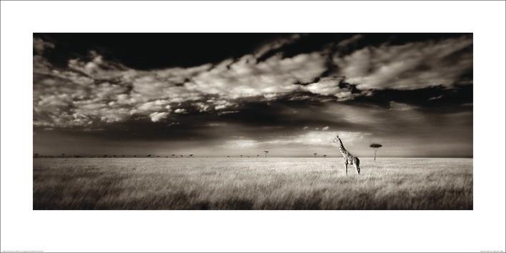 Ian Cumming  - Masai Mara Giraffe Taidejuliste