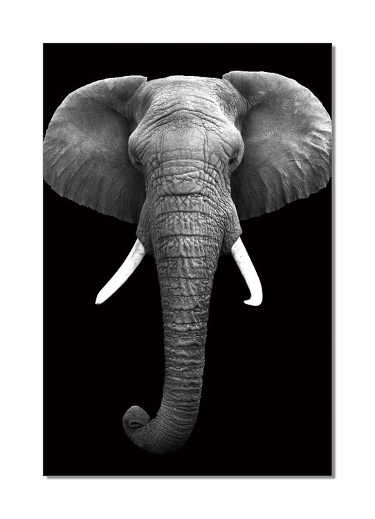 African Elephant (B&W) Taulusarja